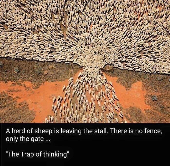 sheep-fence-1.jpg